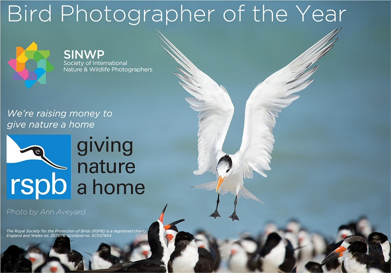 SINWP Bird Photographer of the Year Competition 2020 is now open for entries