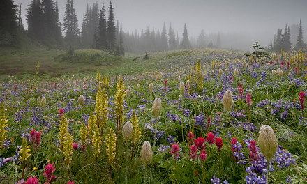 Robert Gibbons – 1st place – Wildflower Landscapes –  International Garden Photographer of the Year.