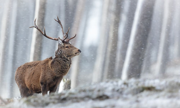 The Living World Photography Competition – Winners Announced