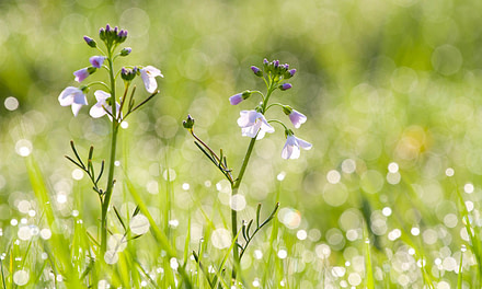 Jake Kneale – 1st place – Youth GPOTY – International Garden Photographer of the Year.