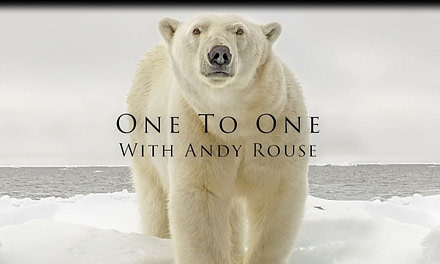 Video: One to one with wildlife photographer Andy Rouse