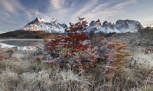 Andrea Pozzi- 1st place – Breathing Spaces- International Garden Photographer of the Year