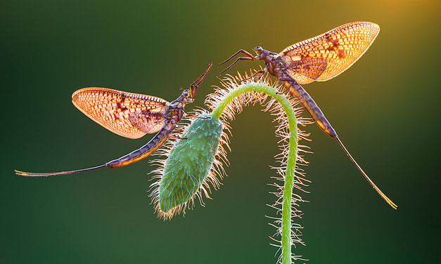 Peter Sabol – 1st place – Macro Art – International Garden Photographer of the Year.